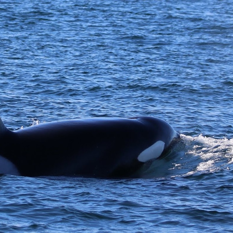 orca%2B2.jpg