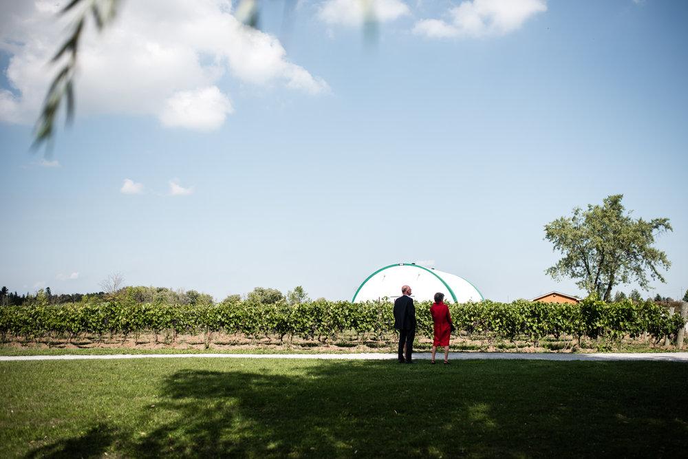 toronto-willowspring-winery-wedding-photographer-4