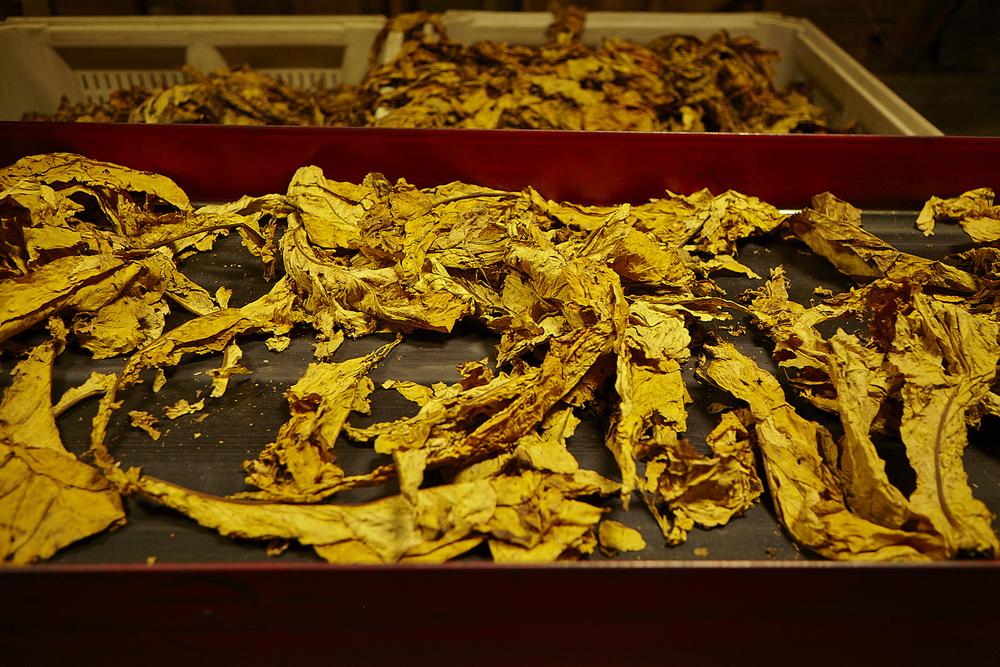 2014-10-26_Tabacco_869.jpg