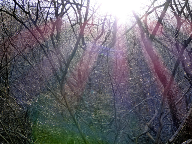 Dense tree branches appearing a web around the soft winter sun