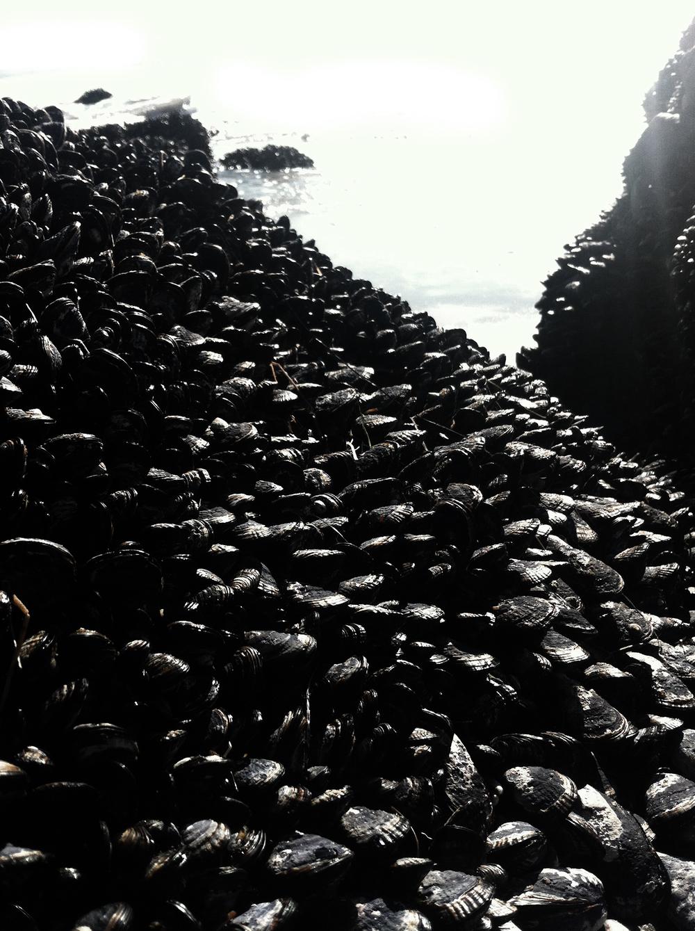 Mussels-1920.jpg