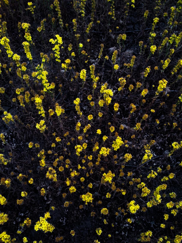 Wildflowers-1920.jpg