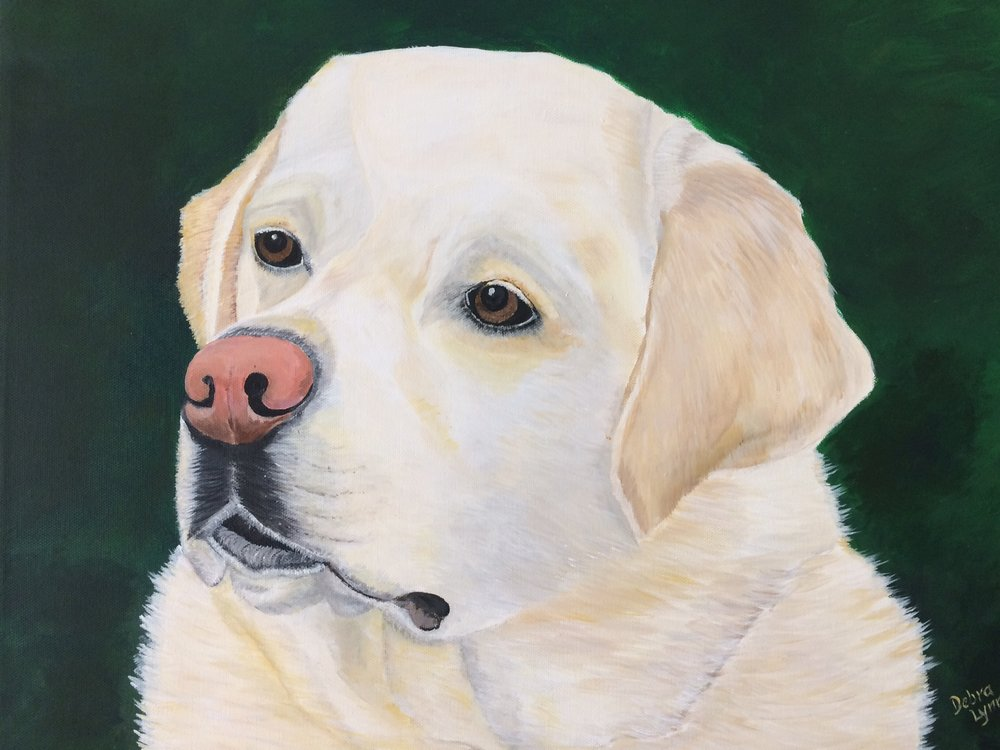 Cody - Yellow Lab