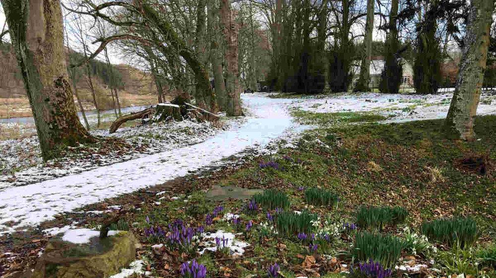Early Spring at Muiresk