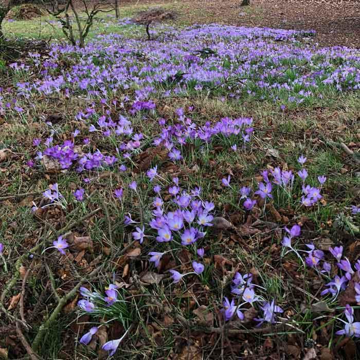 spring2019-03.jpg