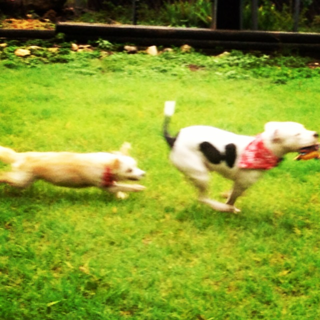 pajamas-and-lola-running.JPG