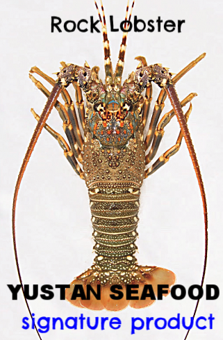 #1 signature product -  Rock Lobster (Panulirus homarus) is Yustan's signature product and its main specialty. With carefully crafted fishing gear and well skilled and equipped team we are able to source these species twice a year during the non-monsoon seasons between September to December and February to May..