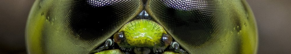 dragonfly-eye