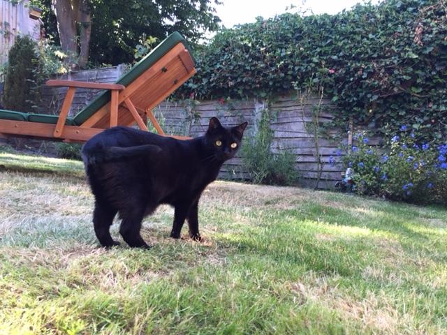 mog-garden-cat.JPG