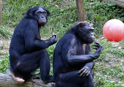 Apes grooming love sex market forces