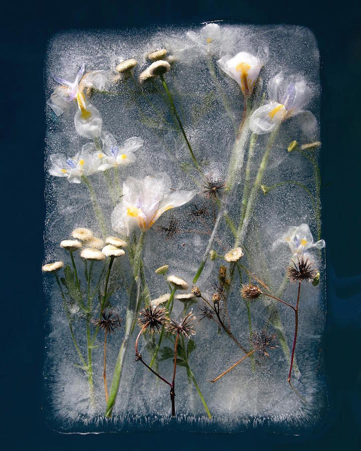 bruce-boyd-zero-degrees-FrozenFlowers- (5).jpg