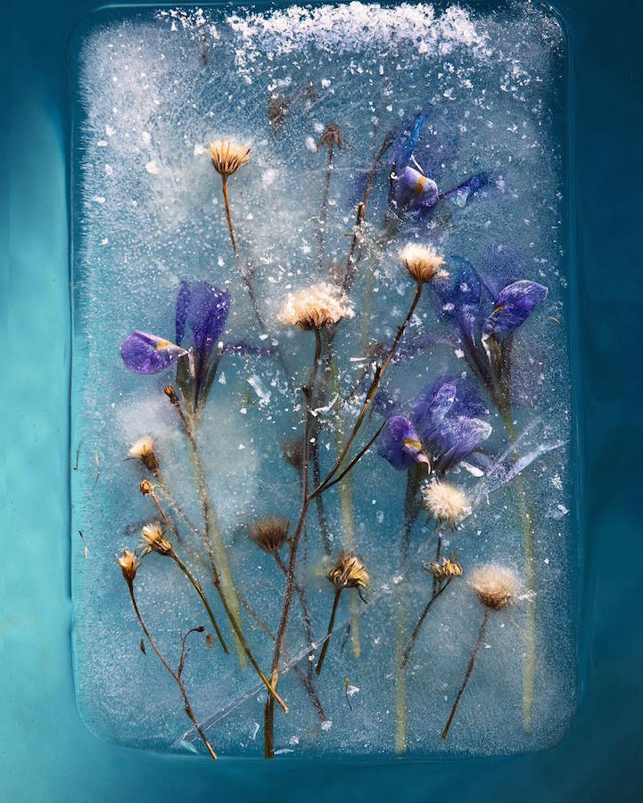 bruce-boyd-zero-degrees-FrozenFlowers- (15).jpg