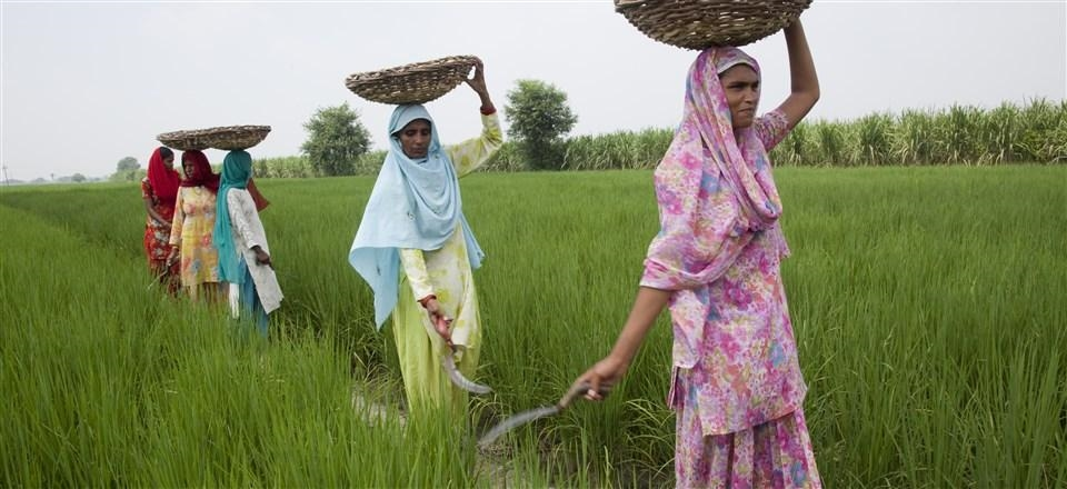 Less than 10% of India's land is owned by women. Image via impatientoptimists.org, a blog of the Gates Foundation