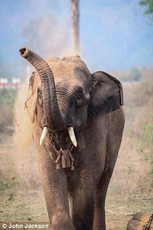 elephants-have-personalities-22618-.jpg