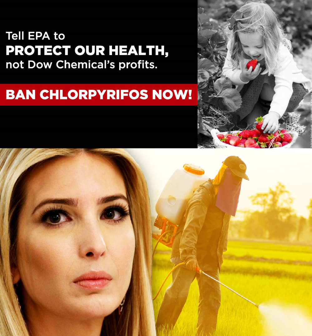 9th Circuit Reverses Trump Administration Relaxation of pesticide chlorpyrifos on food.