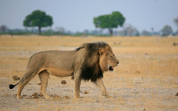 Cecil the Lion legislation-1.jpg