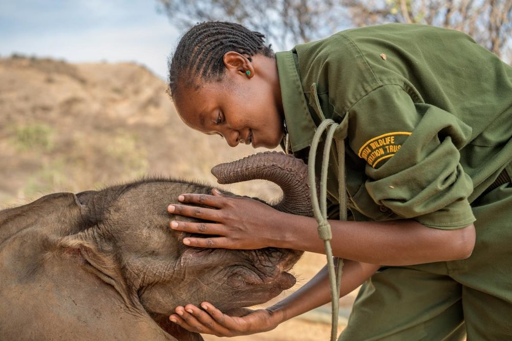 Mary Lengees, one of Reteti's first female elephant keepers caresses Suyian, the first resident. Suyian was rescued in September 2016 when she was just four weeks old.  Image by  Ami Vitale for National Geographic.