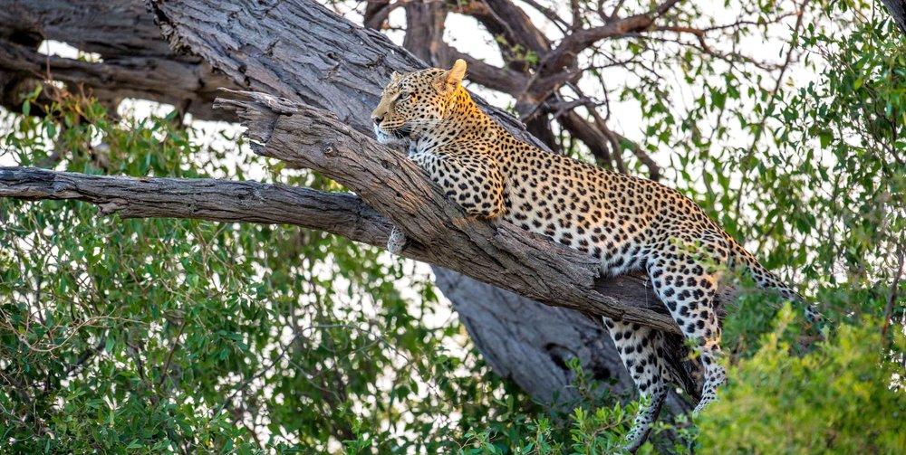 https://www.belmond.com/itineraries/africa/marc-stickler-safari