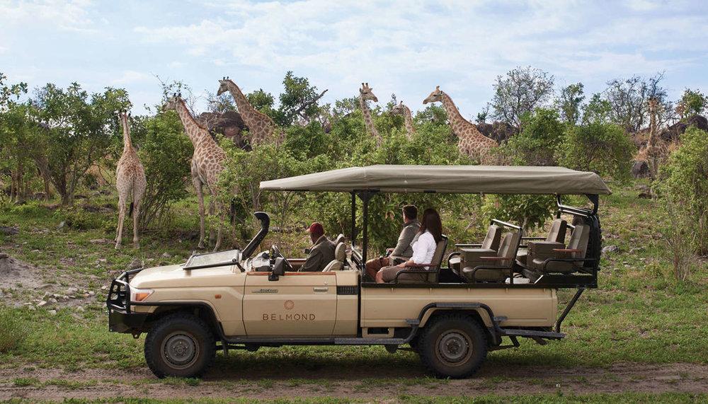 giraffes at Belmond Hotel-121818.jpg
