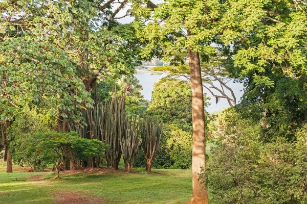 The Entebbe Botanical Gardens are located on the shores of Lake Victoria in the Ugandan town of Entebbe, just outside of the capital Kampala.