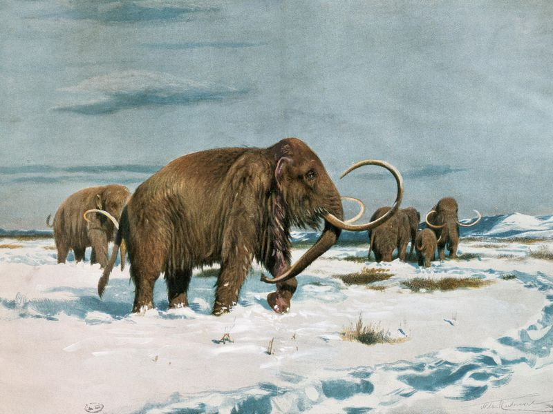 The Last Wooly Mammoths Died Isolated and Alone via  The Smithsonian