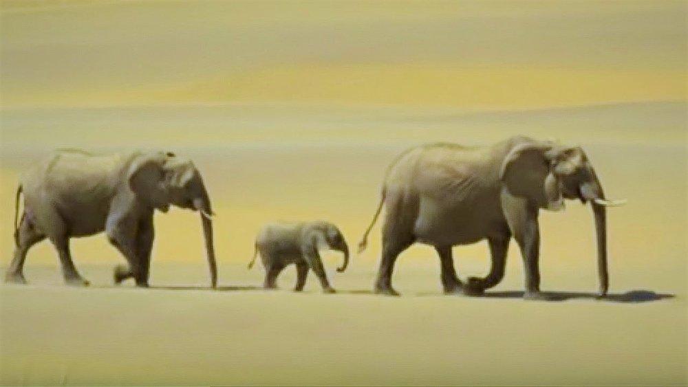 Image  via BBC Wild Earth