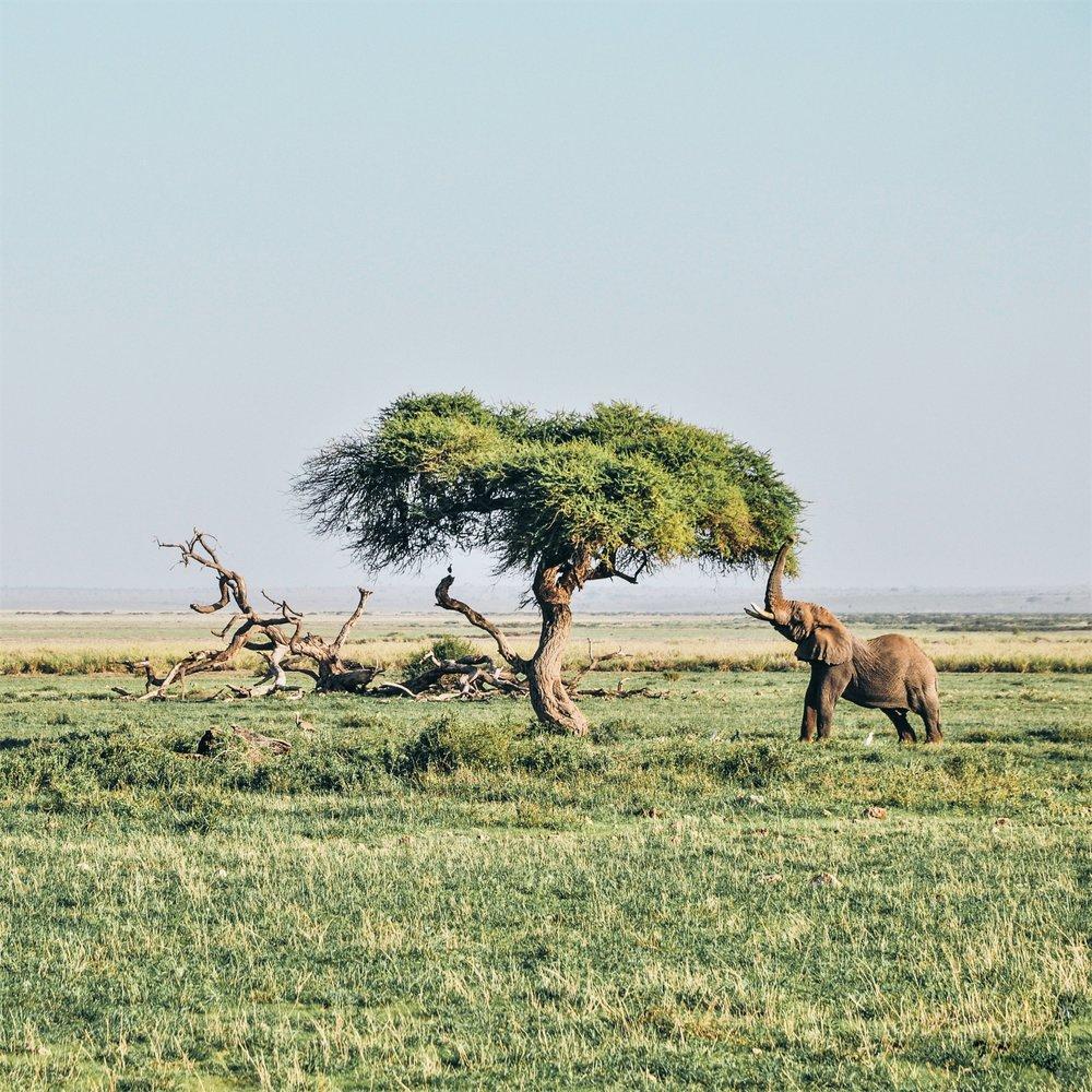 Amboseli National Park, Kenya . Photo by  Harshil Gudka  on  Unsplash