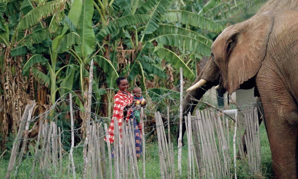 A mother and child watch an elephant over a protective fence set up by their community in Kenya ©  WWF-UK   Story via Africa Geographic.