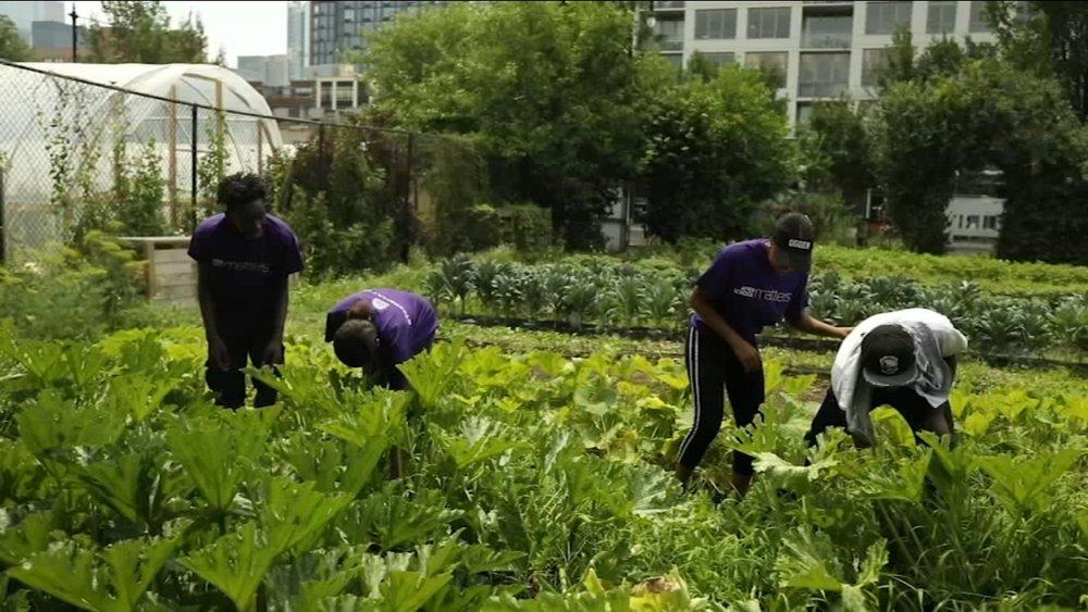 Newsviews:  Chicago urban agriculture  ABC News