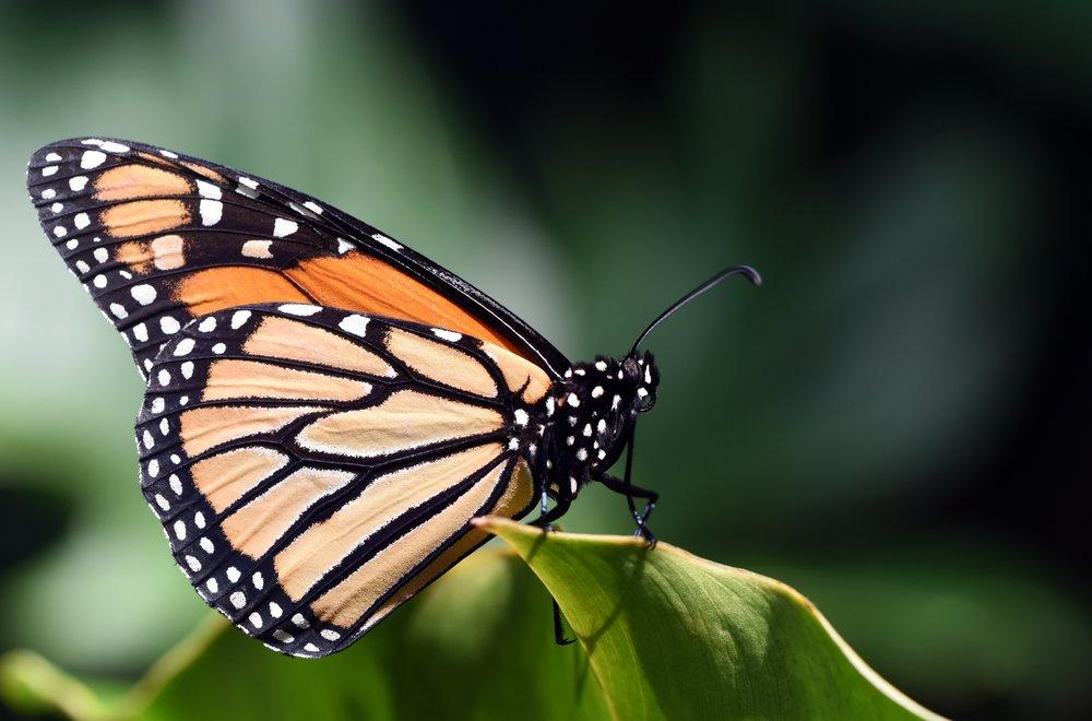 We're butterflies, people!