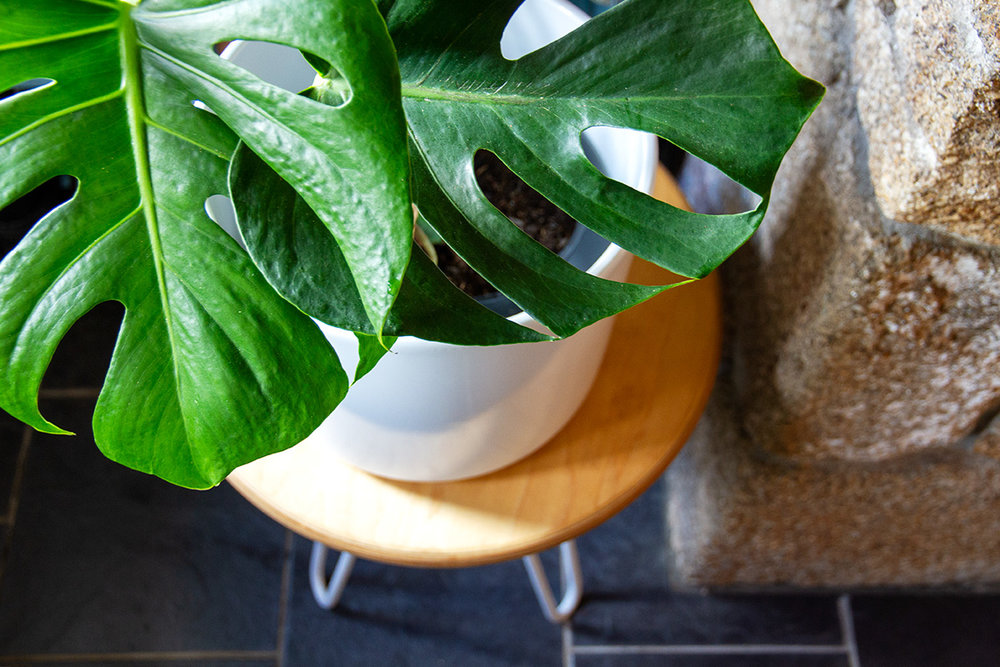 Cord_Industries_hairpin_leg_sidetable_slate_floor_monstera_web.jpg
