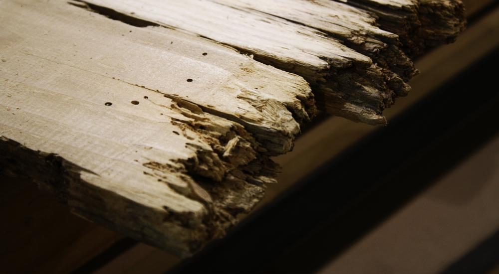 woodrot_closeup.jpg
