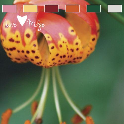Pink and orange color palette Love Midge