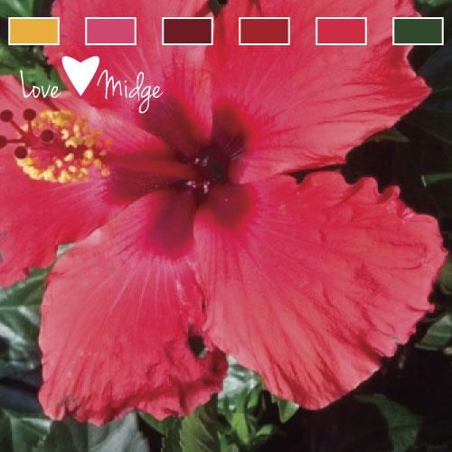 Pink color palette Love Midge