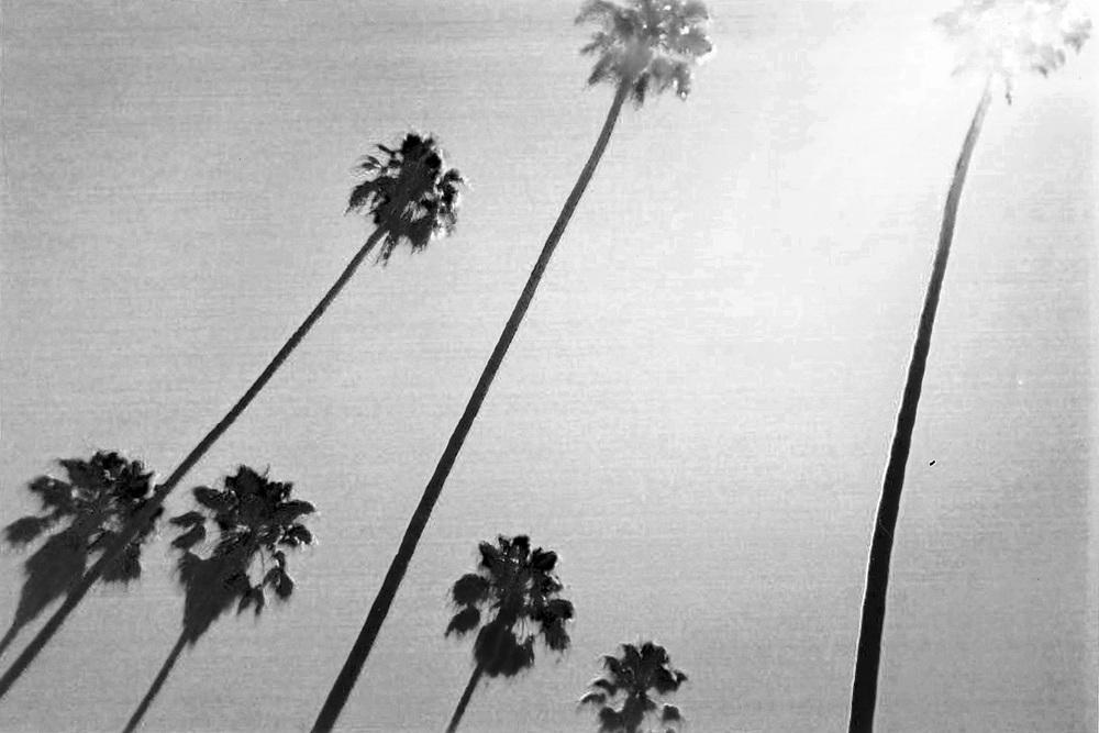 Palm-9_0006_7.jpg