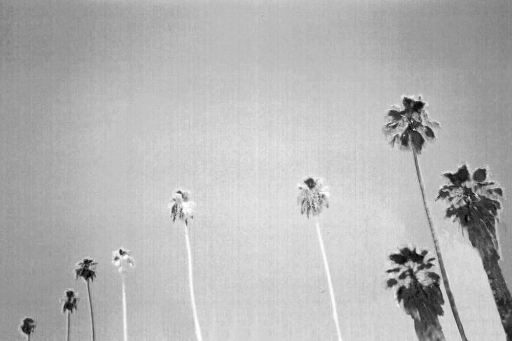 Palm-9_0008_9.jpg