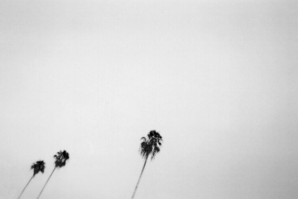 Palm-9_0002_3.jpg