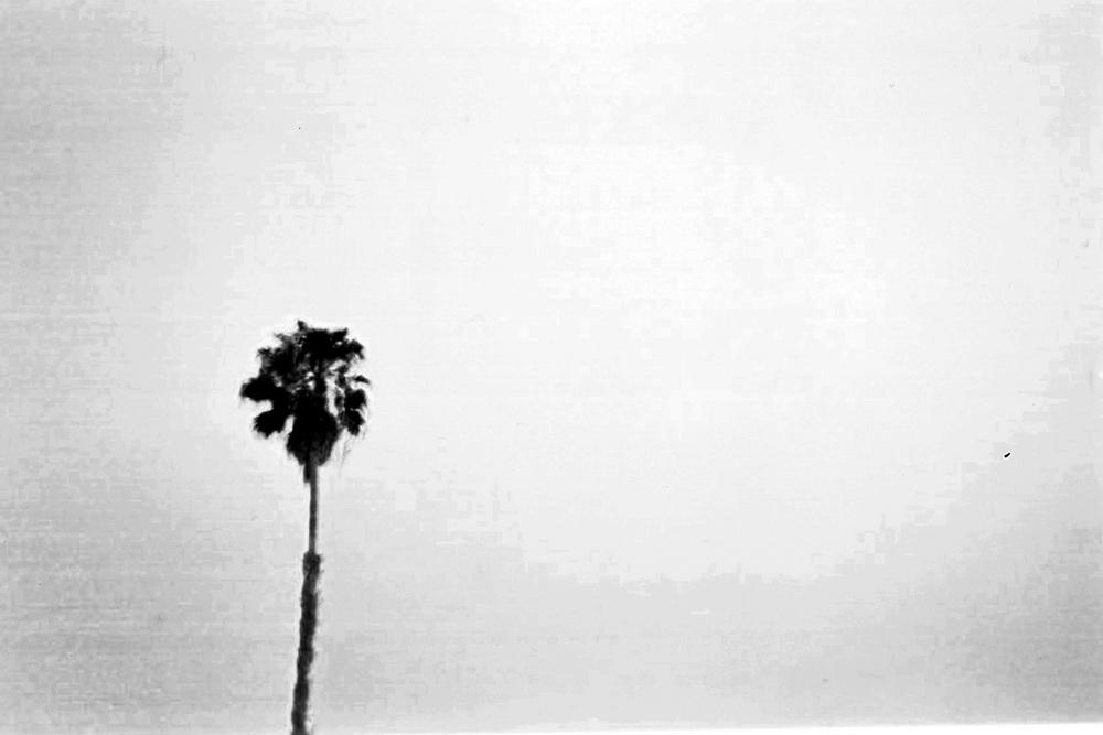Palm-9_0000_1.jpg
