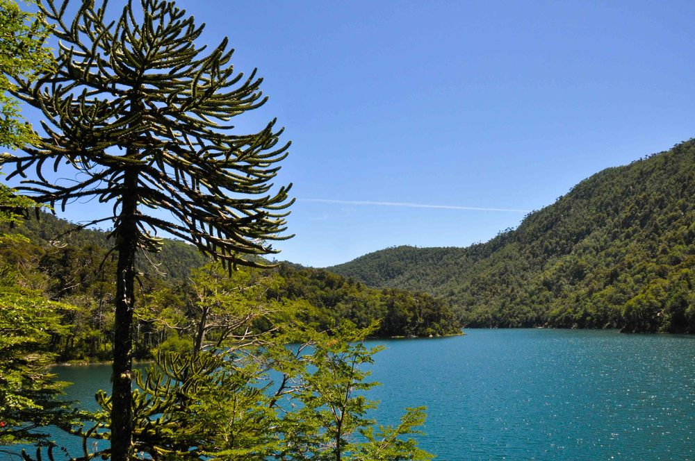 2016_1_s_Lake District chile argentina-42.jpg