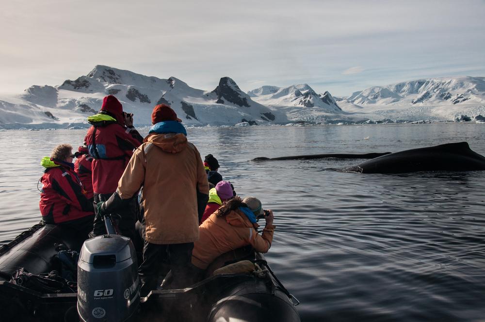 040adelineheymann_Antarctica2_day3-zodiac_whales_0079.jpg