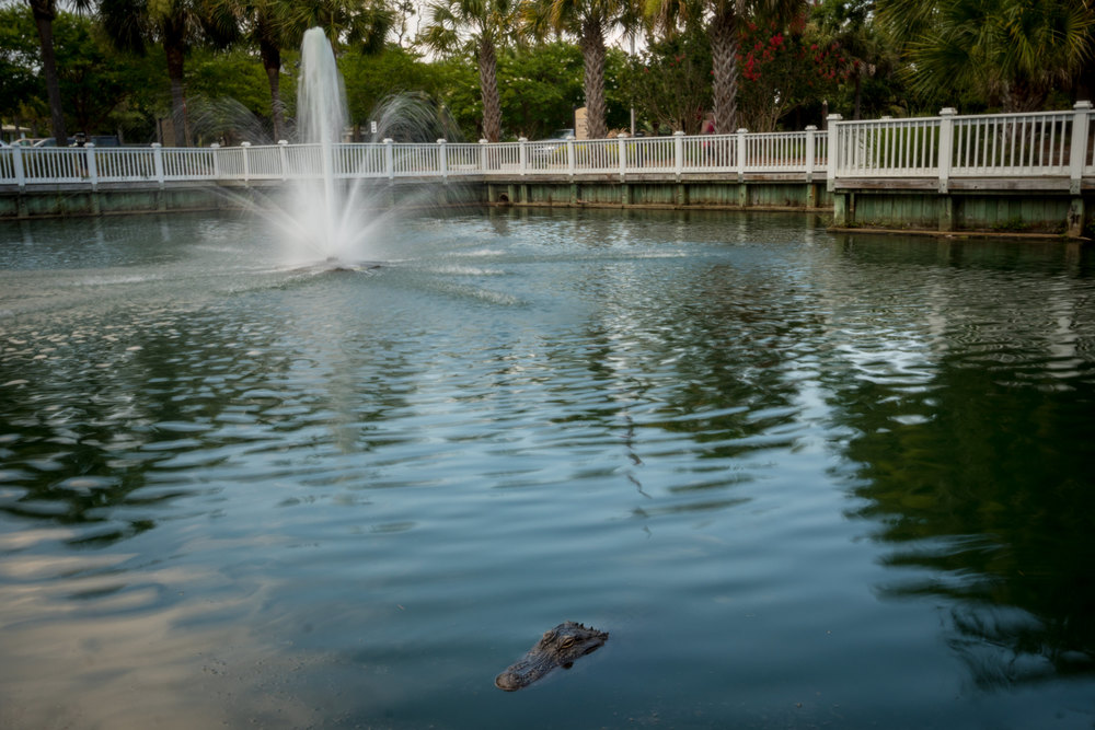 Gator Fountain