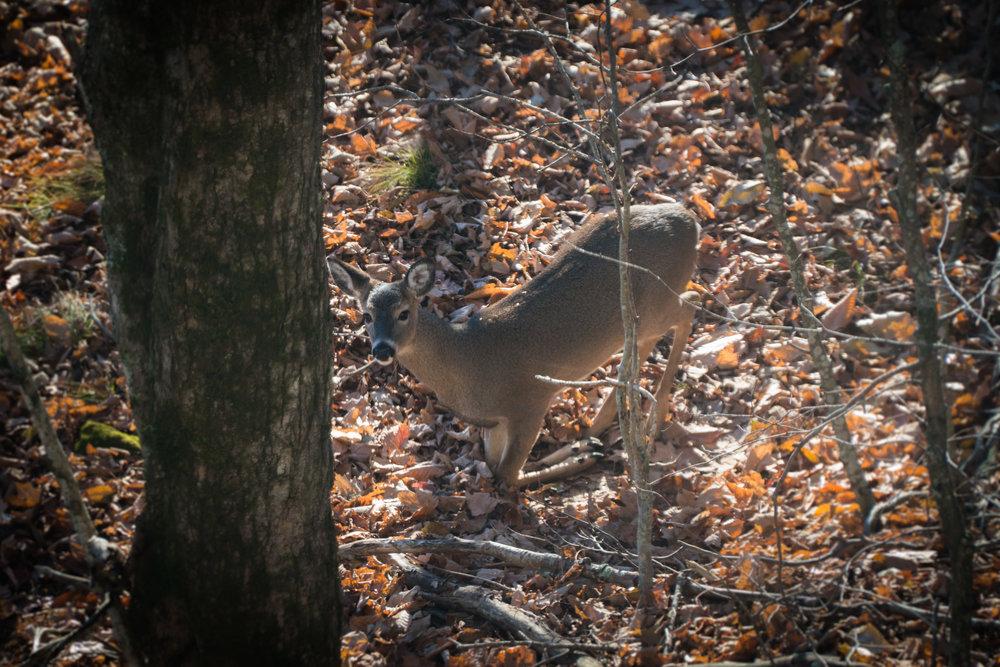 Kneeling Deer