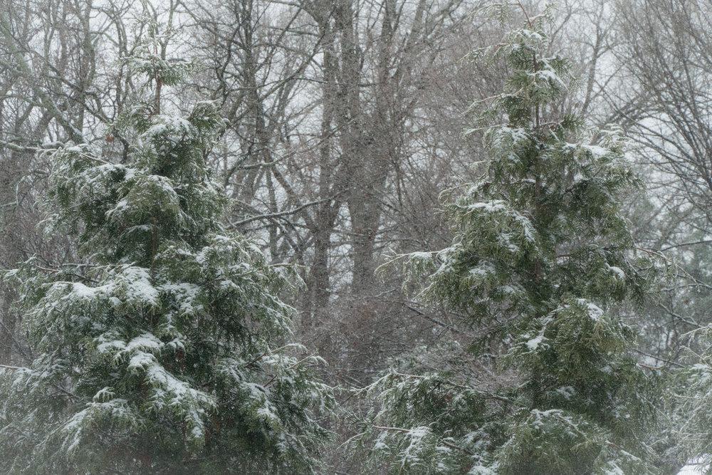 Sudden Snowfall