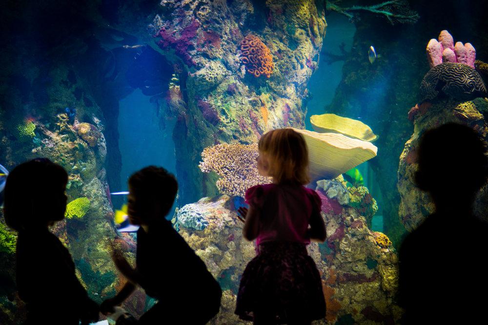 Aquarium Excitement