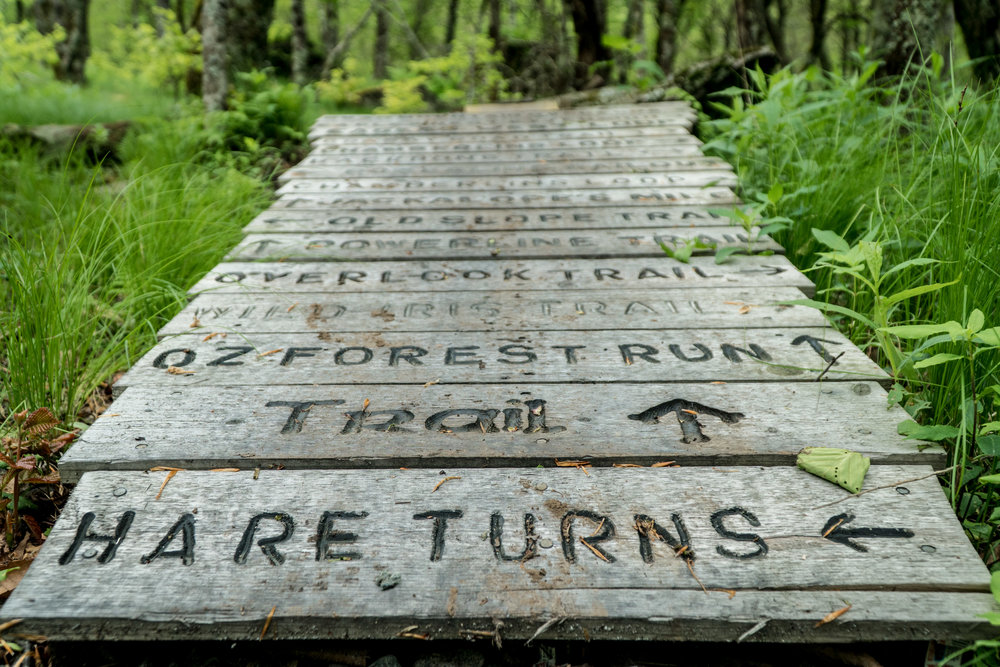 Directions in the forest