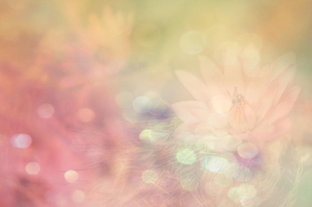 Michelle Haymoz Lotus Cover.jpg