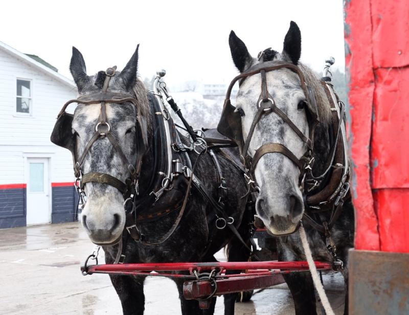 winter horses.JPG