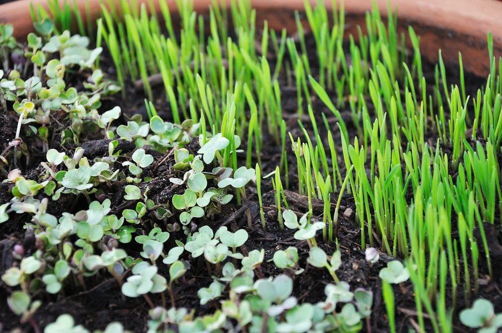 sprouts-763457_1280.jpg