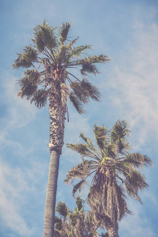 17 palms fade.jpg