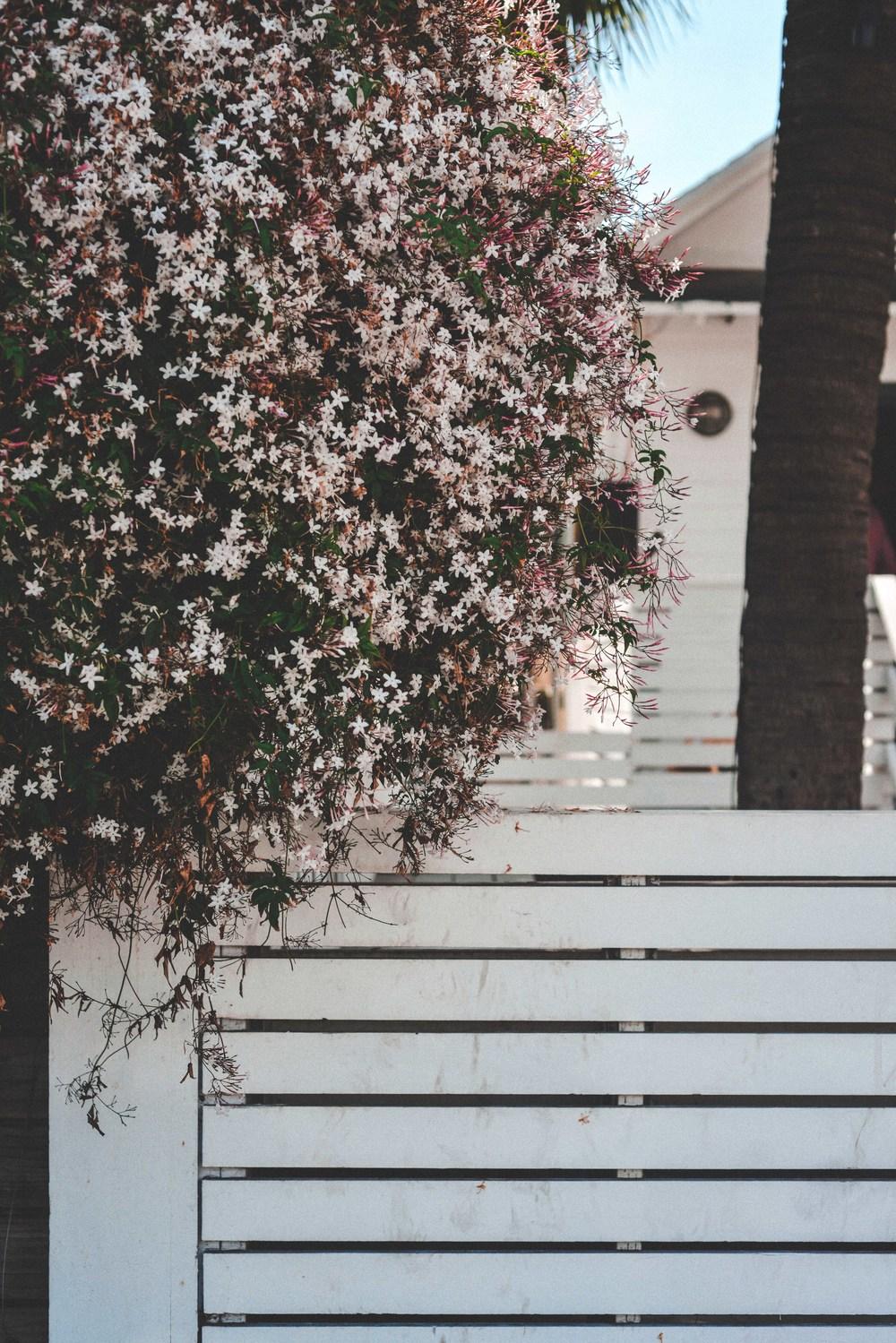 24 flower fence.jpg